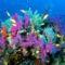 víz alatti világ 22