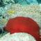 víz alatti világ 5