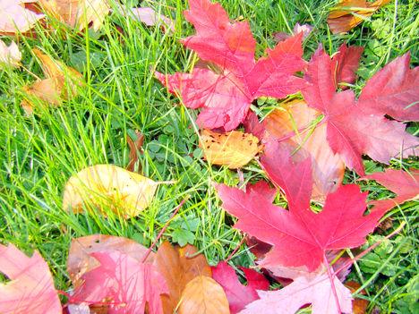 Búcsúzik az ősz... színes  könnyekkel