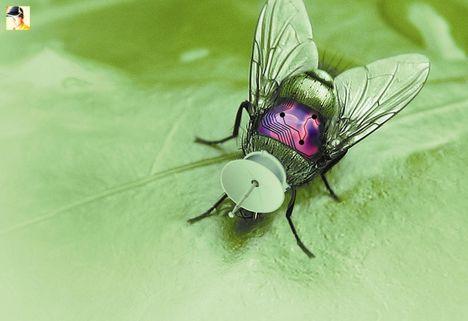 cyborg rovar mint ici-pici bevethető harcijármű