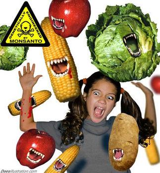 Génmódosított kukorica és szója mindenhol