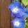 Kis kertem virágai