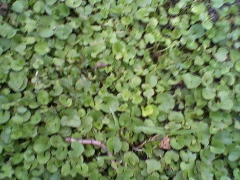 fű helyett