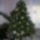 2007 ben díszített karácsonyfa