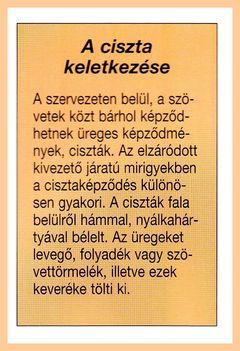 CISZTÁS VESE. 8