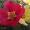 egy nyári virág