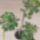 Király András növényei