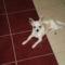 Kutyus és Gazija 2
