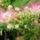 Tyukodi Attila - virágok