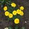 virágaim 078