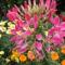 virágaim 102