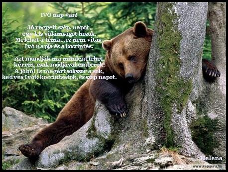 Alkoholista medve