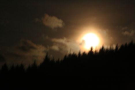 Hold kelte