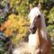 horse-wallpapers002