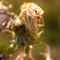 lucerna poloska