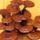 Ganoderma_lucidum-001_1227899_5646_t
