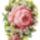 Rózsa képek