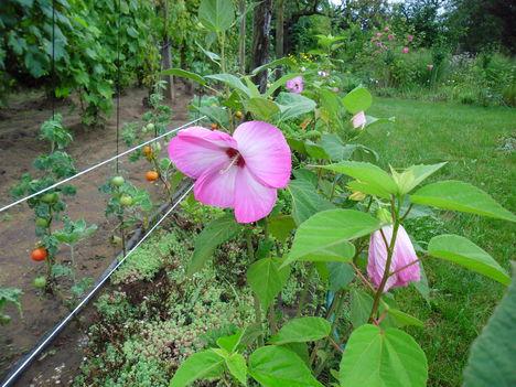 Augusztus a kertbe  12