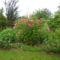 Augusztus a kertbe  14
