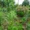 Augusztus a kertbe  16