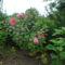 Augusztus a kertbe  18