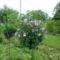 Augusztus a kertbe  19