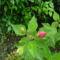 Augusztusi kerti képek