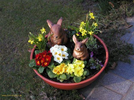 Nyuszidíszek a kerti virágok között