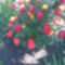 Kép Rózsáim