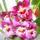 Orchideam-001_1232996_9043_t