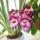 Orchideam_1232990_4317_t