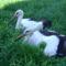 Sérült gólyák 3