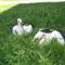 Sérült gólyák 4