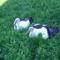 Sérült gólyák 7