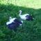 Sérült gólyák 8