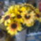 Sopron.Juharfa u-i virágbolt! 2