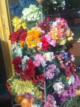 Sopron.Juharfa u-i virágbolt! 4