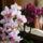 Orchideak-001_1237361_3928_t