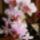 Orchideak-002_1237360_5568_t