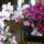 Orchideak-003_1237359_5253_t
