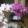 Orchideak-004_1237358_9640_t