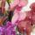 Orchideak-007_1237354_1437_t