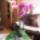 Orchideak-008_1237353_7855_t