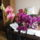 Orchideak-009_1237352_3212_t