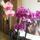 Orchideak-010_1237351_9642_t