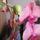 Orchideak-012_1237349_8173_t