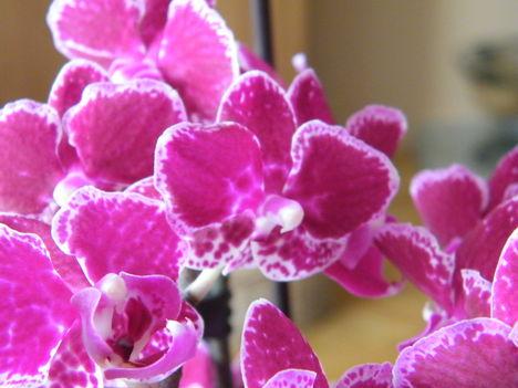 Orchideák