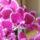 Orchideak-015_1237346_4854_t