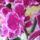 Orchideak-018_1237343_7304_t
