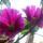 Vassné Edit virágai